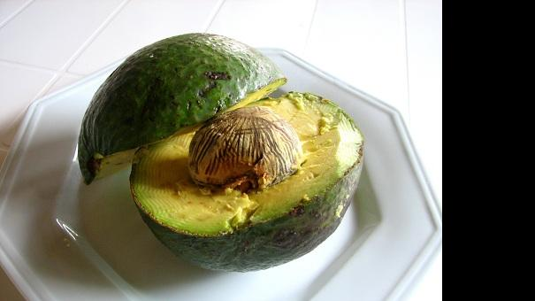 avocado3_xenia.jpg