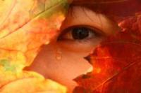1091652_asian_autumn_3.jpg