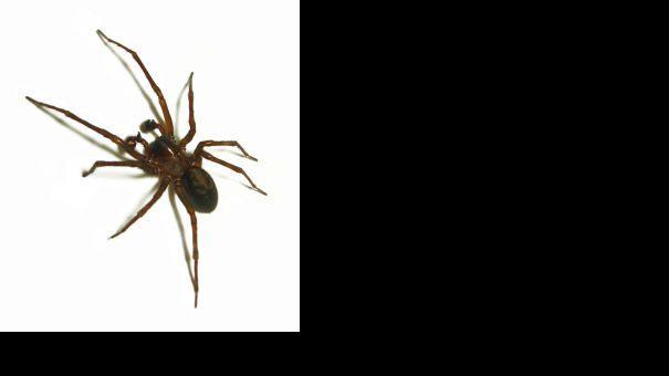 964417_itsy_pitsy_spider.jpg